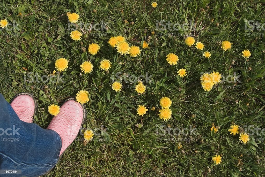Pink Boots and Yellow Dandelions royalty-free stock photo