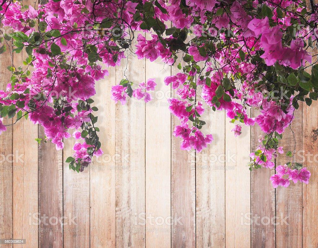 Kwiat różowy Bugenwilla  – zdjęcie