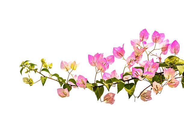 Blumenranken - Bilder und Stockfotos - iStock