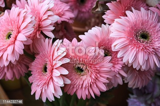 Pink bouquet of gerberas