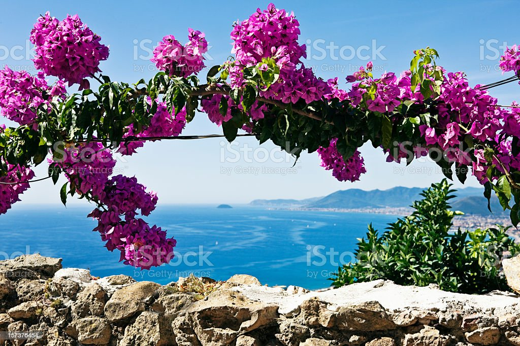 Pink Buganvilias Flowers. Color Image stock photo