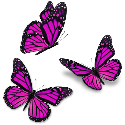 Pink Butterfly Stock Photo - Download Image Now - iStock
