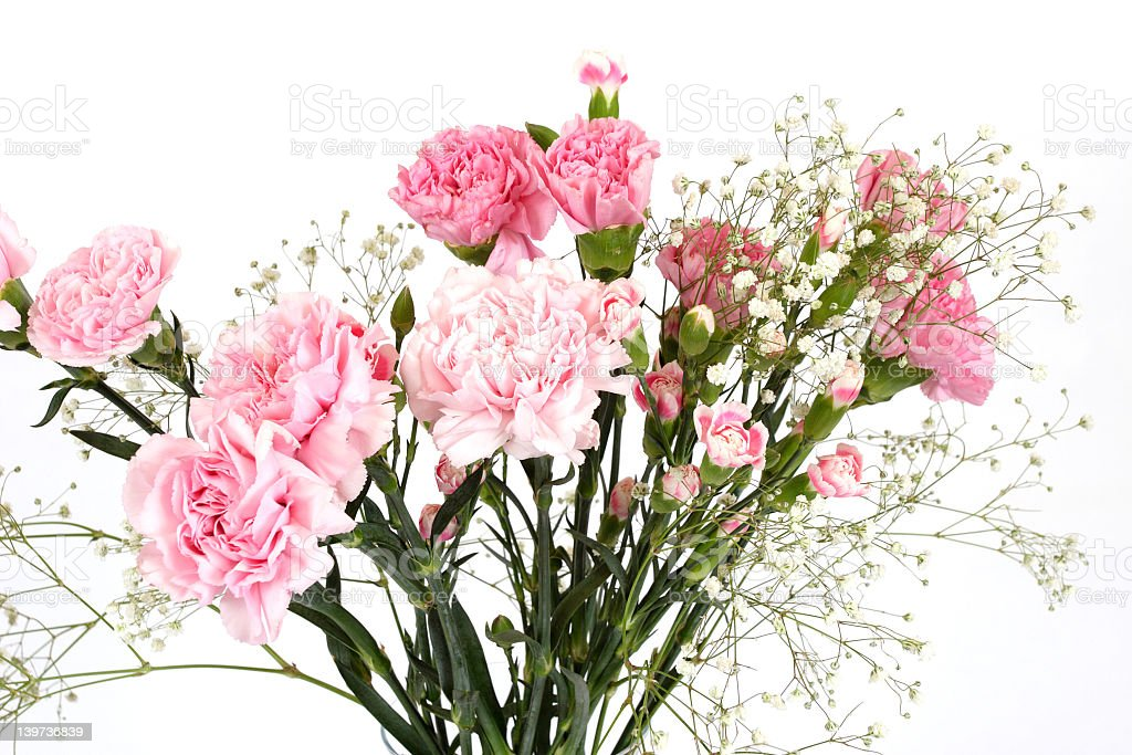 Pink carnation and babys breath in flower arrangement stock photo pink carnation and babys breath in flower arrangement royalty free stock photo mightylinksfo