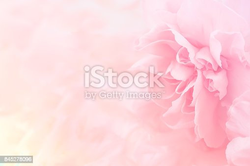 istock Pink Carnation Flowers Bouquet. soft filter. 845278096