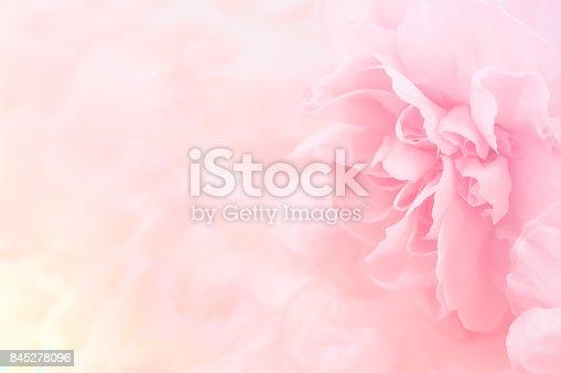 istock Pink Carnation Flowers Bouquet. soft filter. 845278096