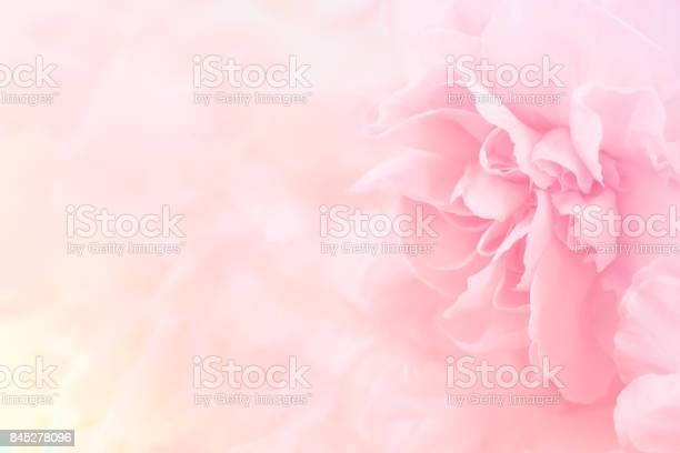 Photo of Pink Carnation Flowers Bouquet. soft filter.