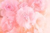ピンクのカーネーションの花のブーケ。ソフト フィルター。