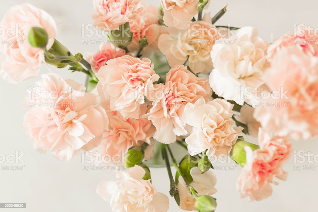 Pink Carnation Gilly Flower Bouquet Stock Photo & More Pictures of ...