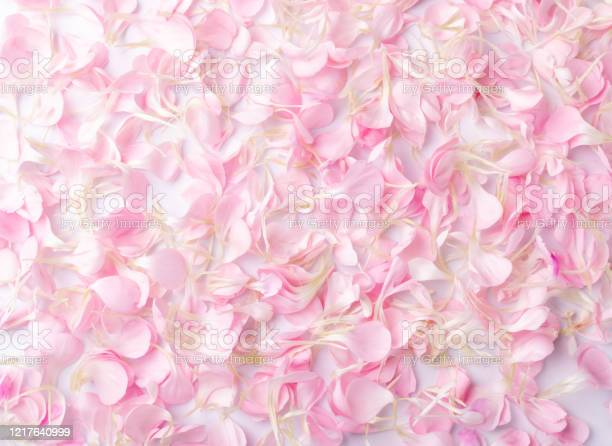 Pink carnation petals texture dianthus or schabaud background picture id1217640999?b=1&k=6&m=1217640999&s=612x612&h=hwdyxvv8j7vf0b9qudvtbulghtsbrwxhem9s29yeova=