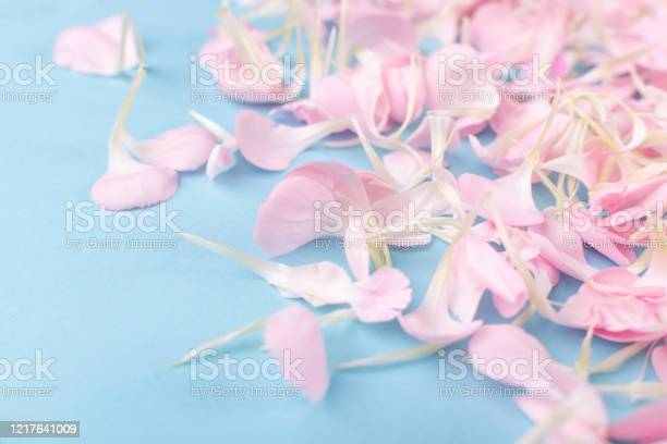 Pink carnation petals texture dianthus or schabaud background picture id1217641009?b=1&k=6&m=1217641009&s=612x612&h=g x5t2vzfyb9g19xse1rkin48ypgpjib9bgid292xhc=