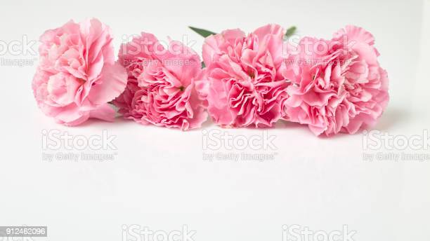 Pink carnations flower for mothers day picture id912462096?b=1&k=6&m=912462096&s=612x612&h=xrpfqo6k73vz97pgktcknrt2lrvgaohsuguit7gqnta=