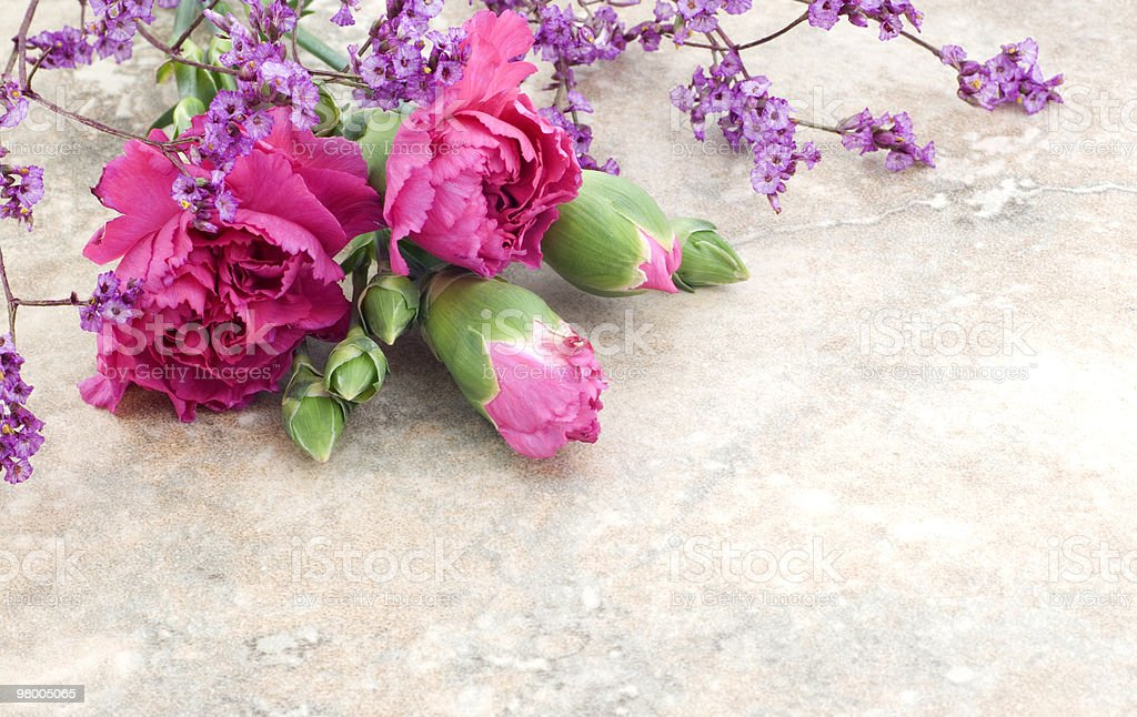 Pink Carnations on Vintage Background royalty-free stock photo