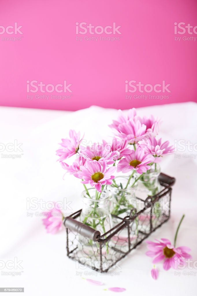 Pink chrysanthemum flowers on white wooden background 免版稅 stock photo