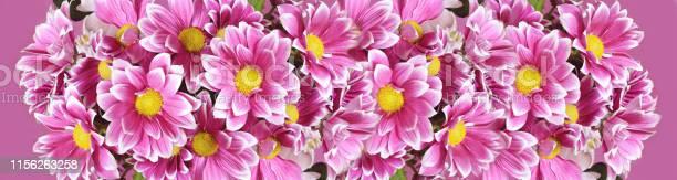 Pink chrysanthemum flowers picture id1156263258?b=1&k=6&m=1156263258&s=612x612&h=1f54ezdxb mxept1is8nwgoldskygj327w3aezpsjta=
