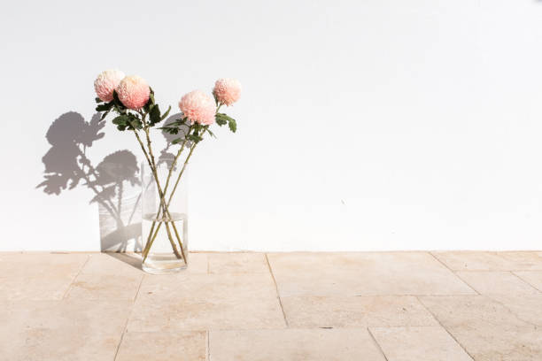 Pink chrysanthemums in vase against white external wall stock photo