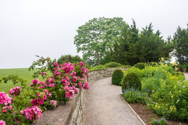 Pink climbing roses bloom on a wall near a garden path stock photo