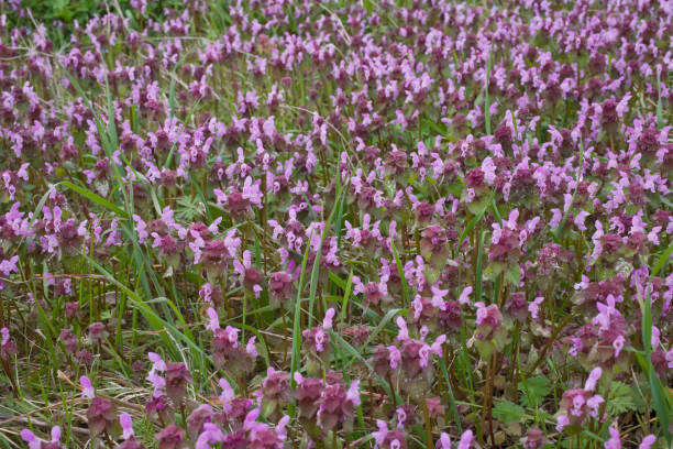 Pink colored wild flowers. stock photo