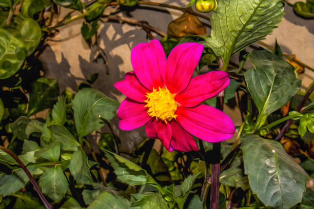 Pink Cosmos flower garden, This photo has been given a Photo effect to make it resemble an oil painting stock photo