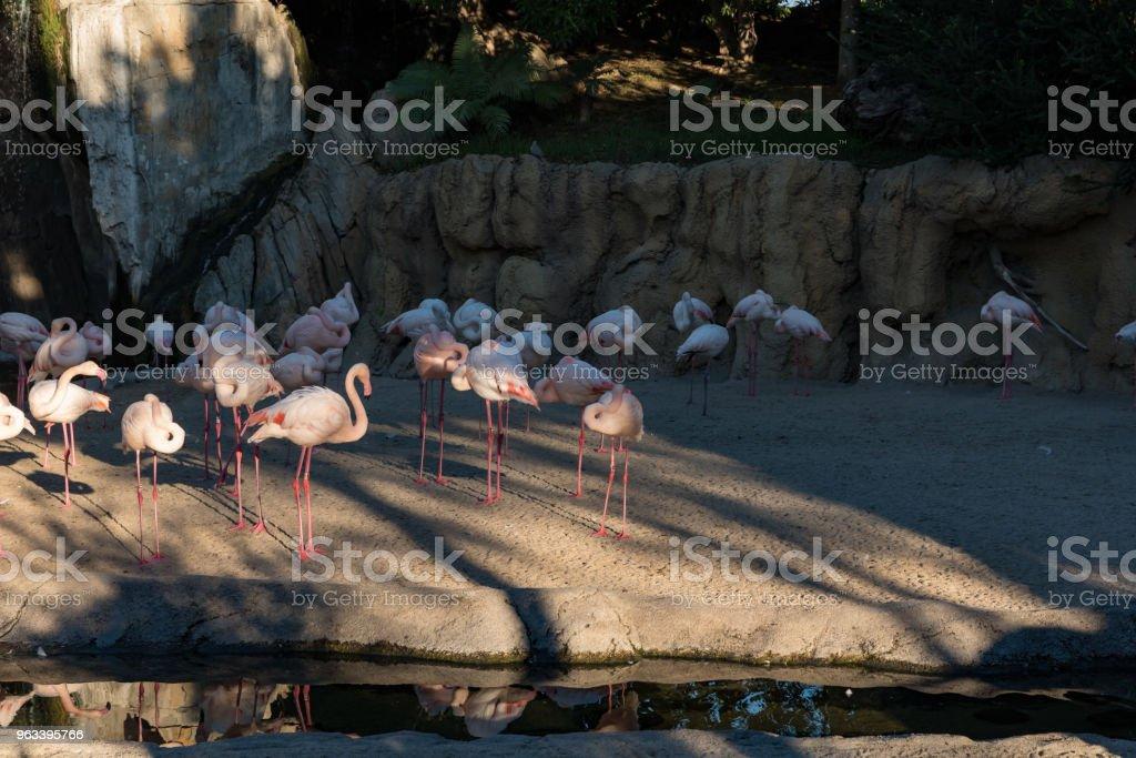 pink cranes near the river - Zbiór zdjęć royalty-free (Bez ludzi)