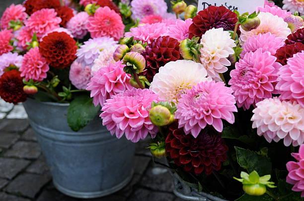 Rosa Dália series no mercado de flores - foto de acervo