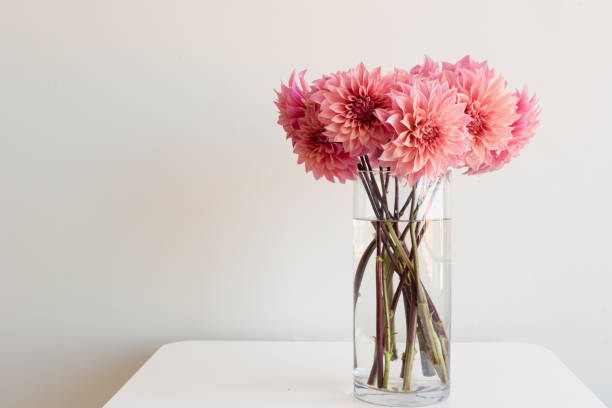 Dahlias roses dans un vase de verre sur la table - Photo