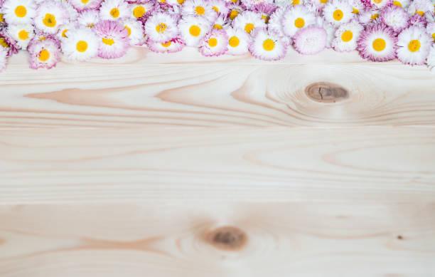 Pink Daisies Flat lay. Daisy Blumen auf Holzgrund. Copy Space – Foto
