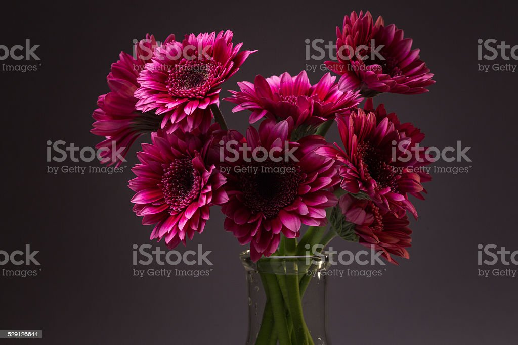 Pink Daisies in a Vase stock photo