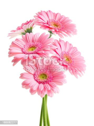 Pink Gerbera flowers bouquet. Isolated on white background with Clipping Path.