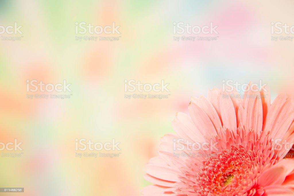 Rosa Fiori Margherita Confine Un Colorato Sfondo Di Primavera Colori