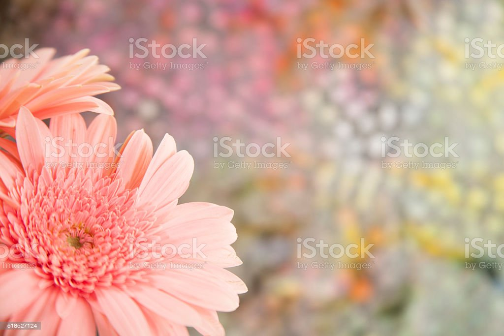 Pink daisy flowers border a colorful spring background.  Pastels.