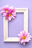 istock Pink daisy flowers composition, photo frame on pastel velvet background. Flat lay, top view, copy space 1241423284