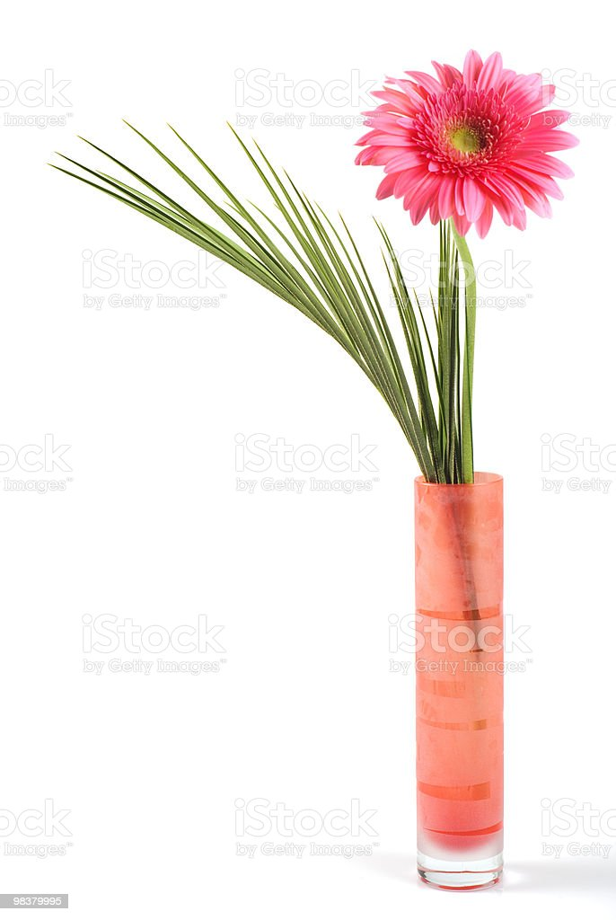 Pink daisy in red vase royalty-free stock photo
