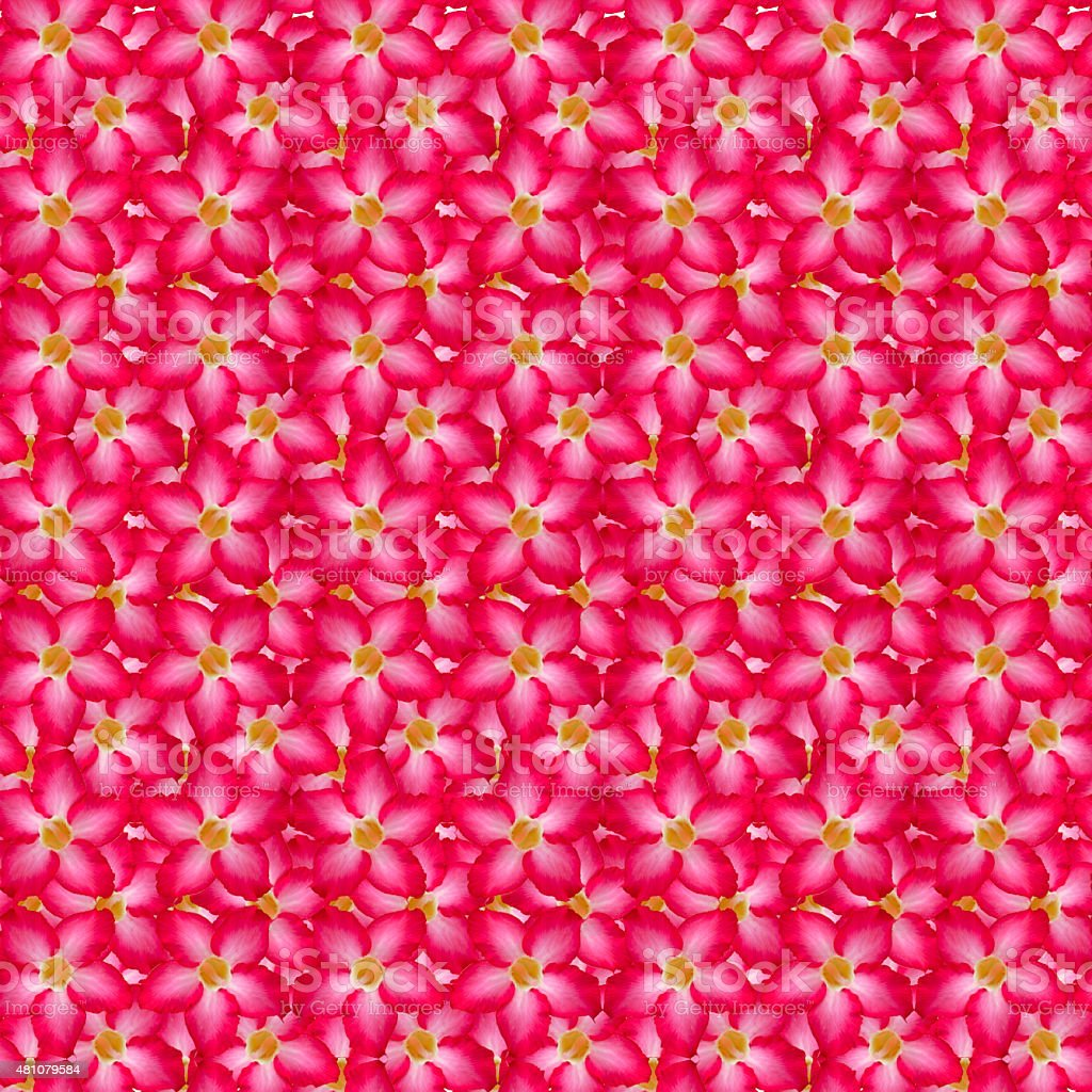 Pink desert background stock photo