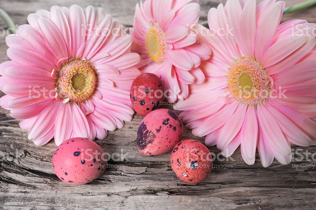 Pink Easter eggs with daisy flowers royalty-free stock photo