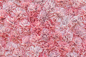 pink fabric flower background