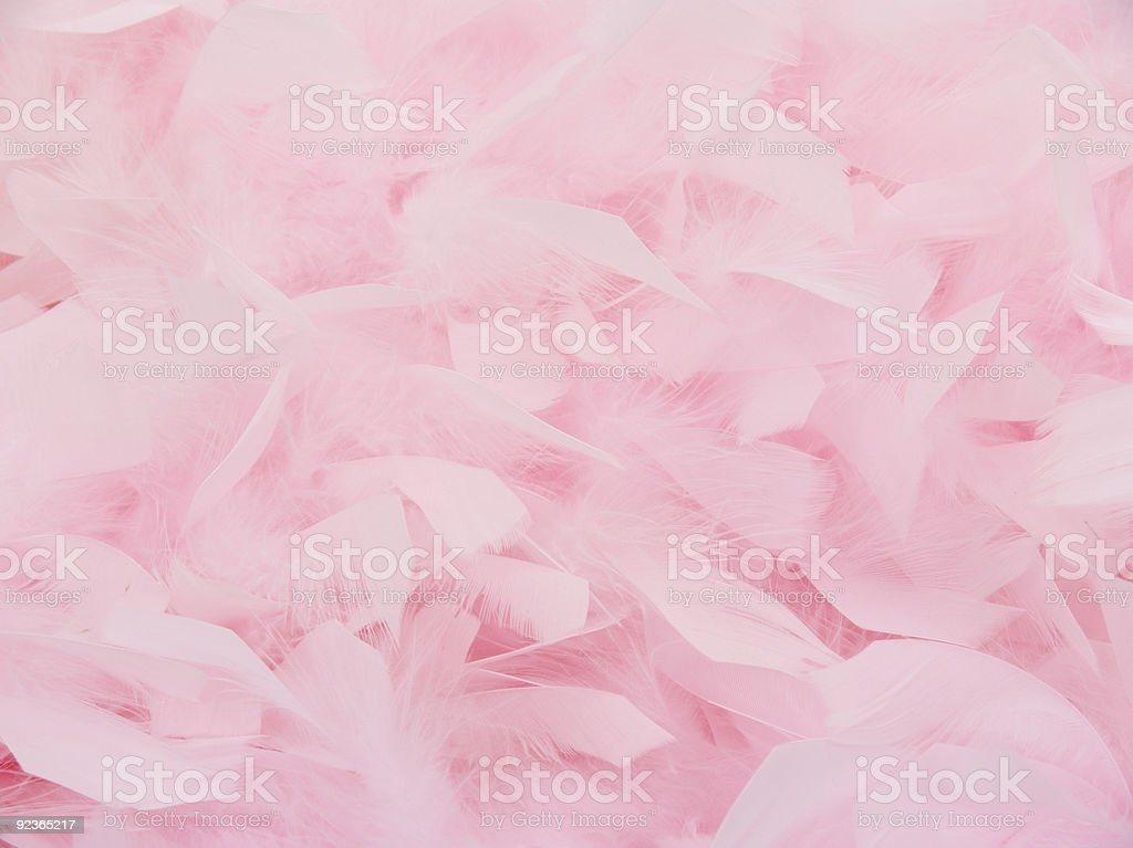 Pink Feather Boa2 stock photo