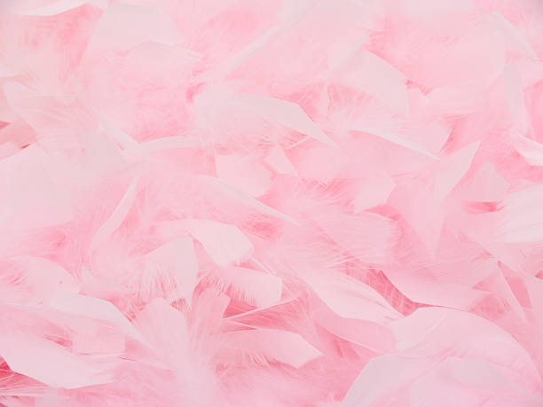 pink feather boa2 - femininity stock pictures, royalty-free photos & images
