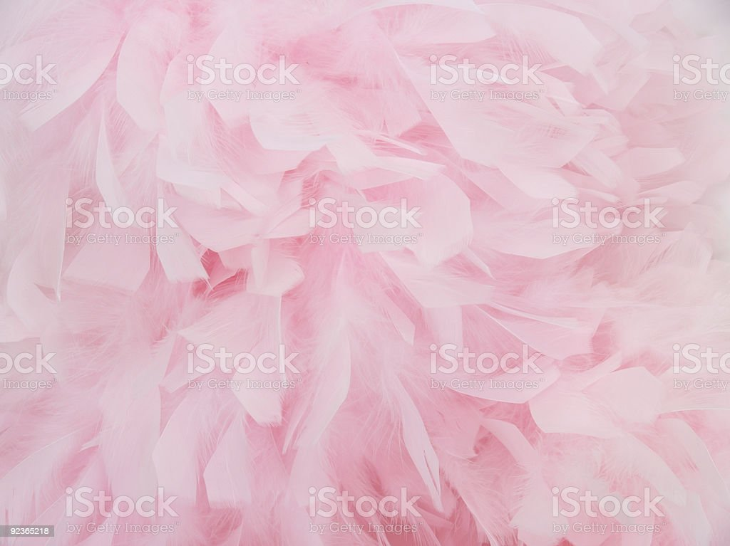 Pink Feather Boa3 stock photo