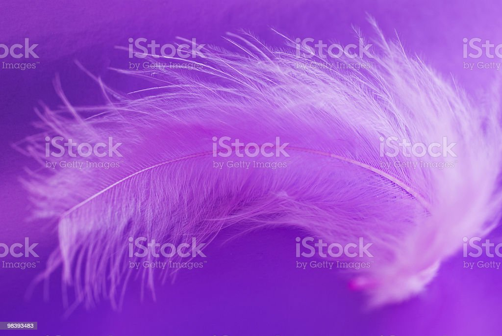 Pink feather on a violet background royalty-free stock photo