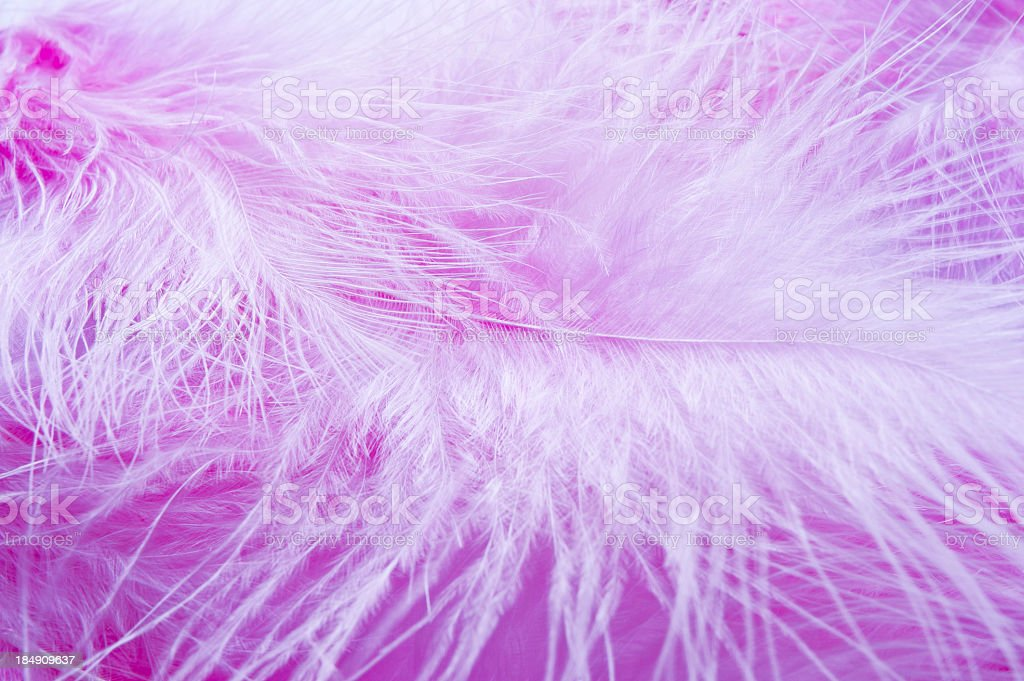 Pink Feathers Close Up royalty-free stock photo