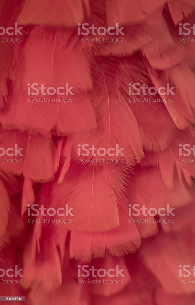 pink feathers like in a boa up close royalty-free stock photo