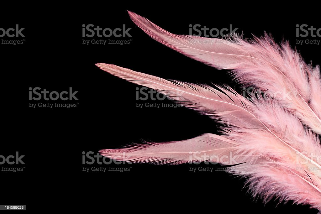 Pink feathers royalty-free stock photo