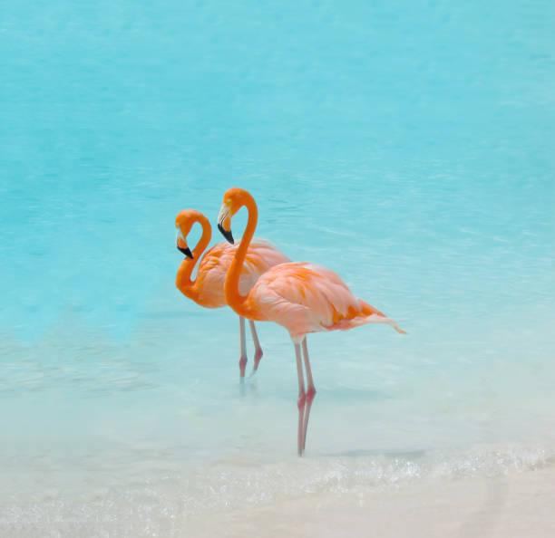 roze flamingo bird - aruba stockfoto's en -beelden