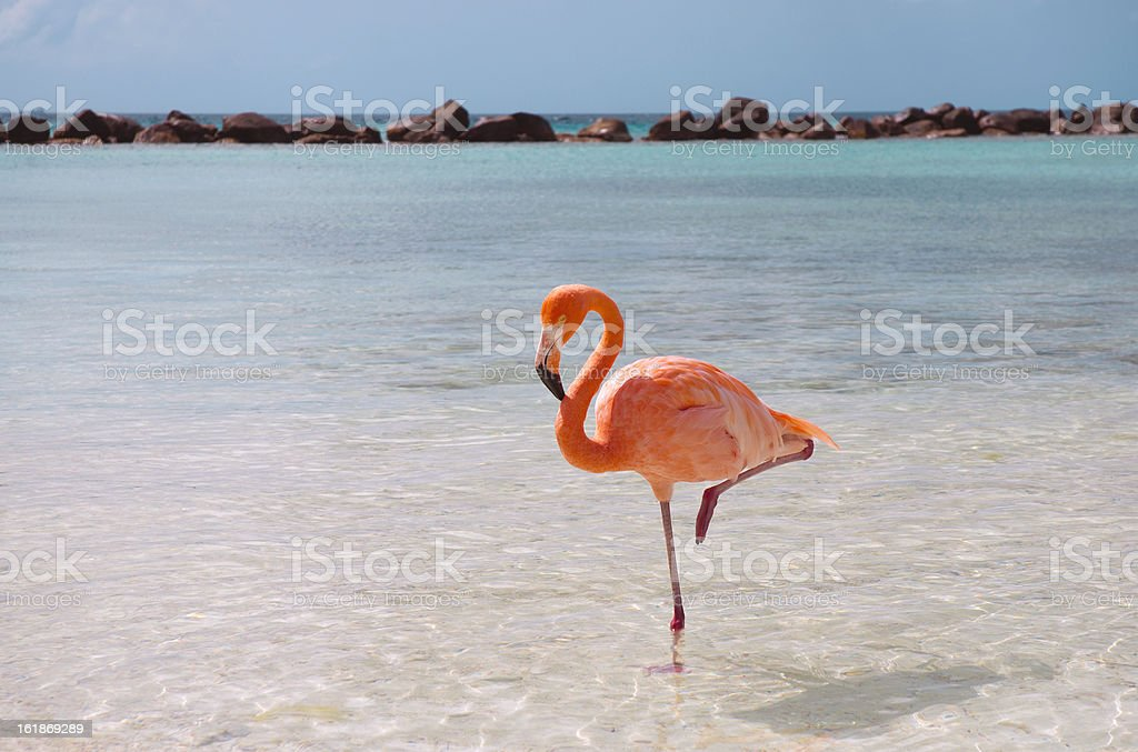 Pink flamingo in the water at the beach with clear blue sky stock photo