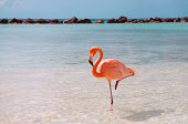 Pink flamingo in the water at the beach with clear blue sky