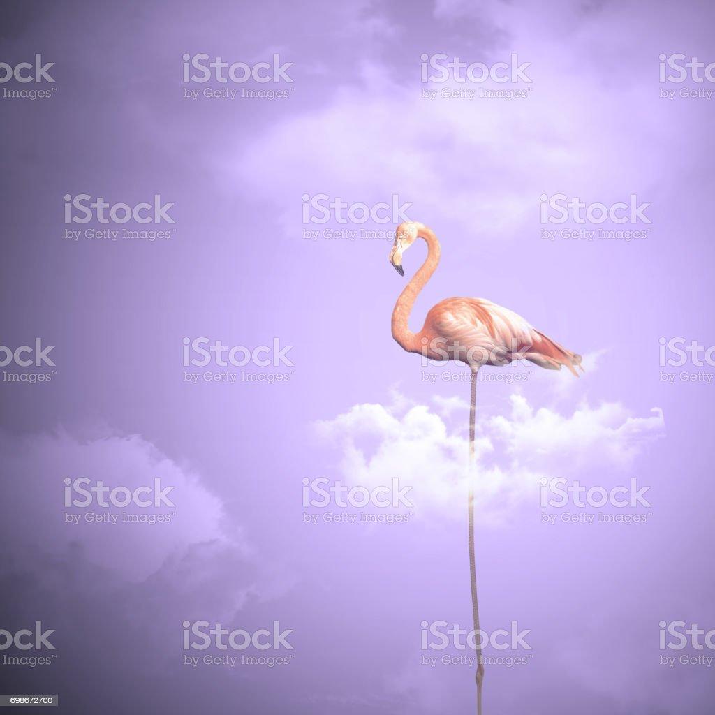 Pink Flamingo on a Cloud - Phoenicopterus roseus stock photo