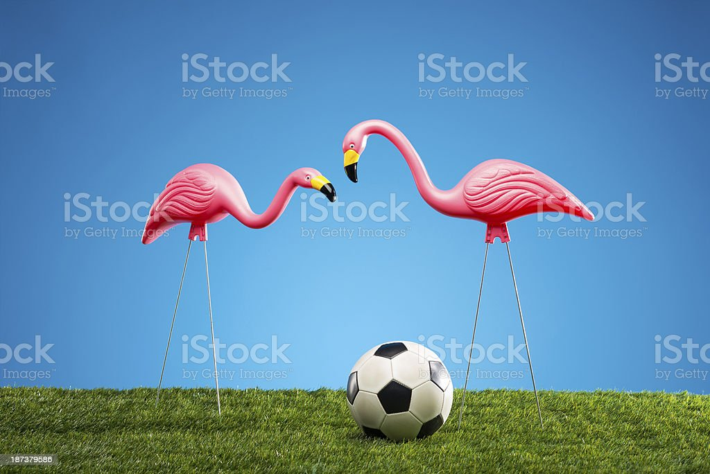 Pink Flamingos And Soccer Ball stock photo