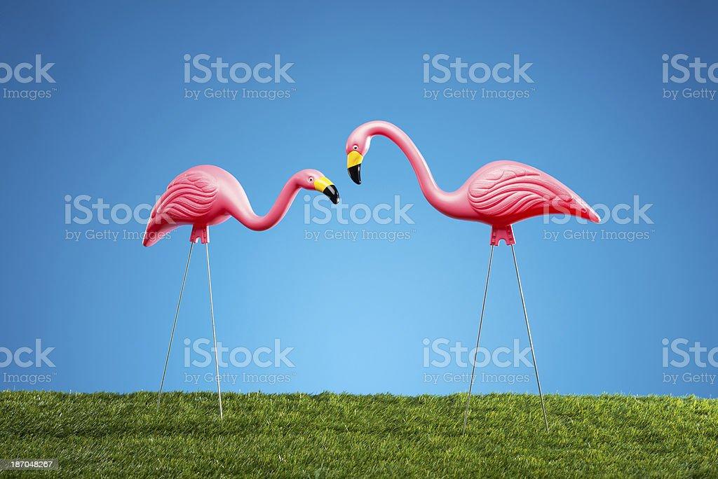 Rosa Flamingos – Foto