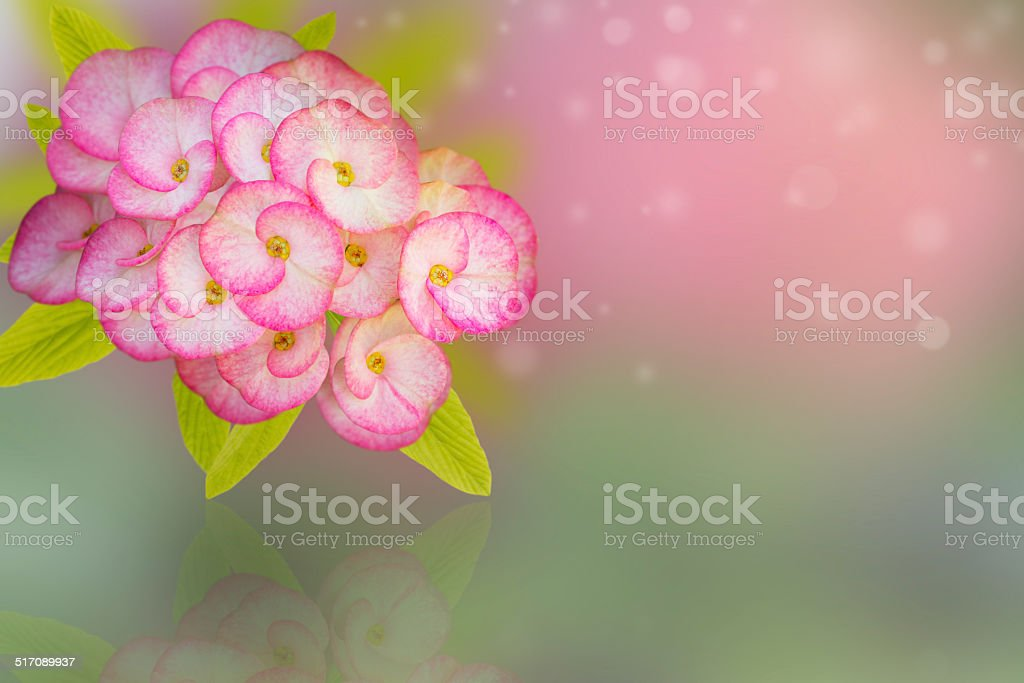 pink flower and reflect stock photo