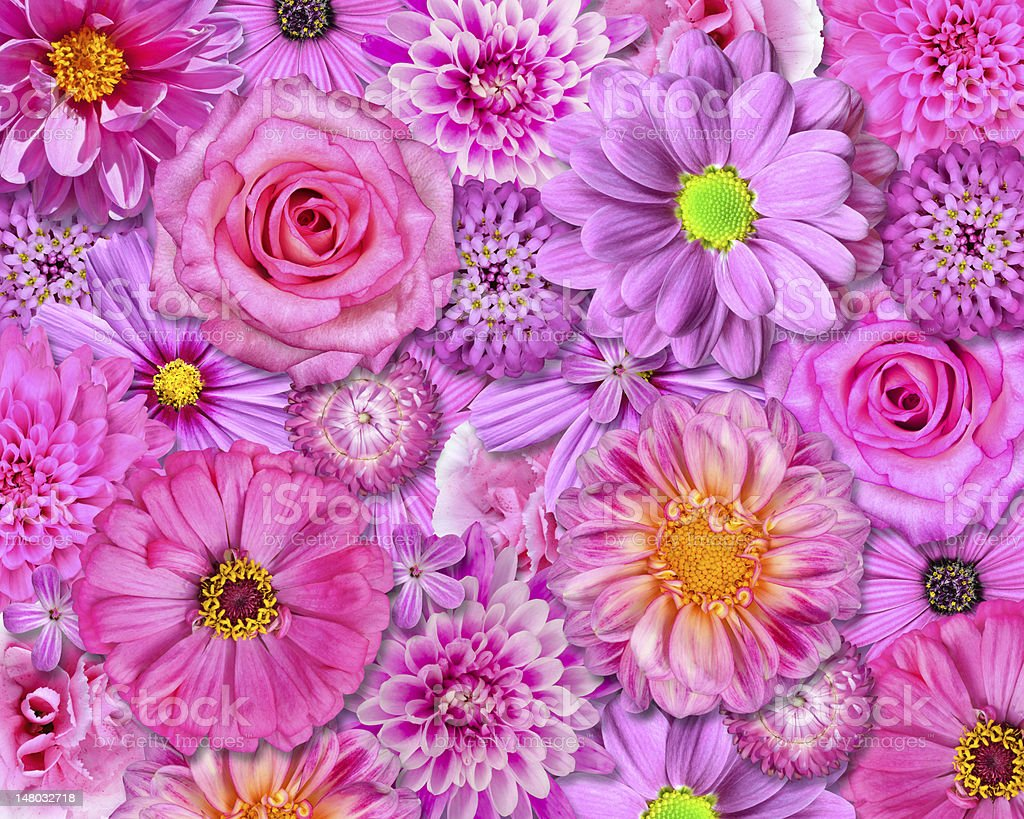 Pink Flower Background Stock Photo More Pictures Of Beauty Istock